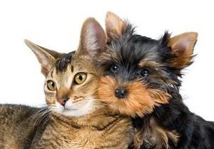 hundochkattdjurbild