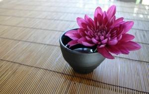 chrysanthemum-757439_640