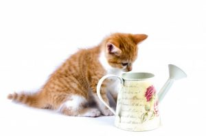 katt-skotsel